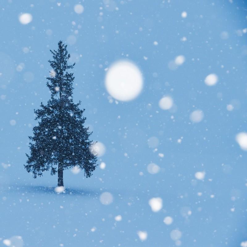雪のように輝いて
