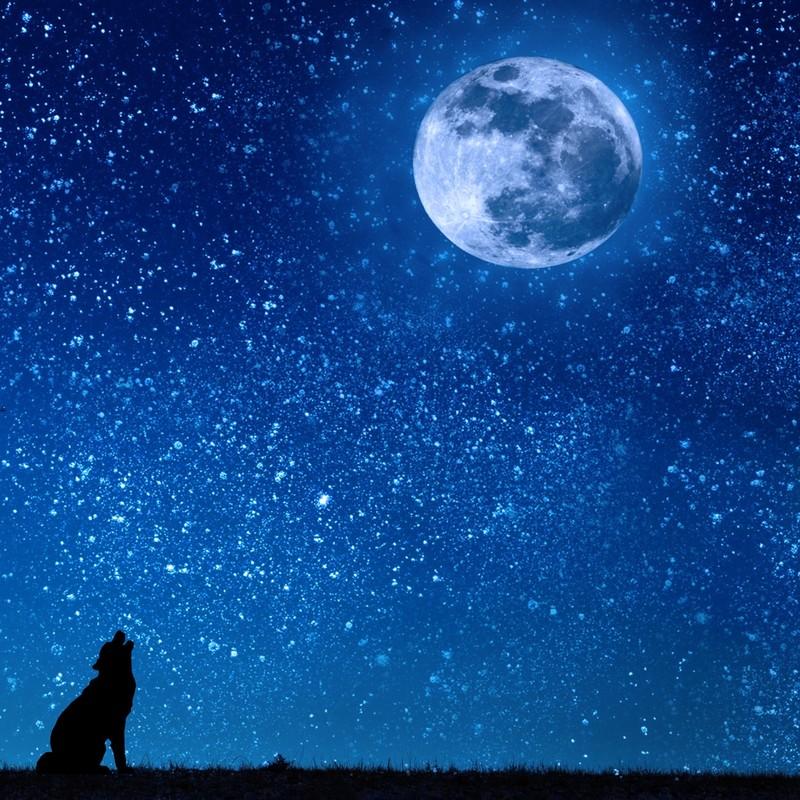 オオカミと青い月