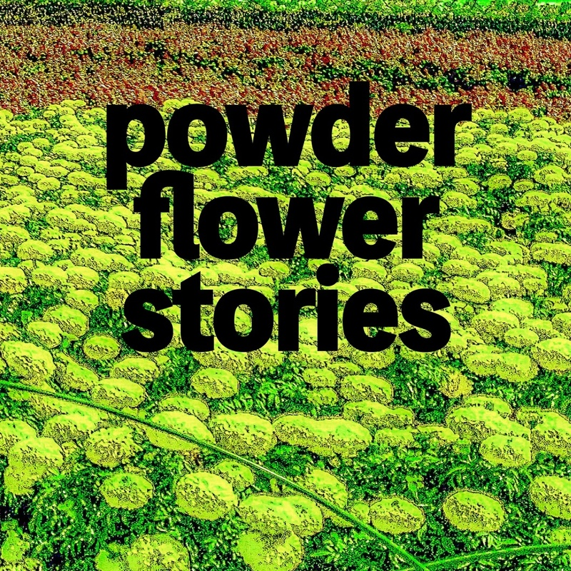 powder flower stories