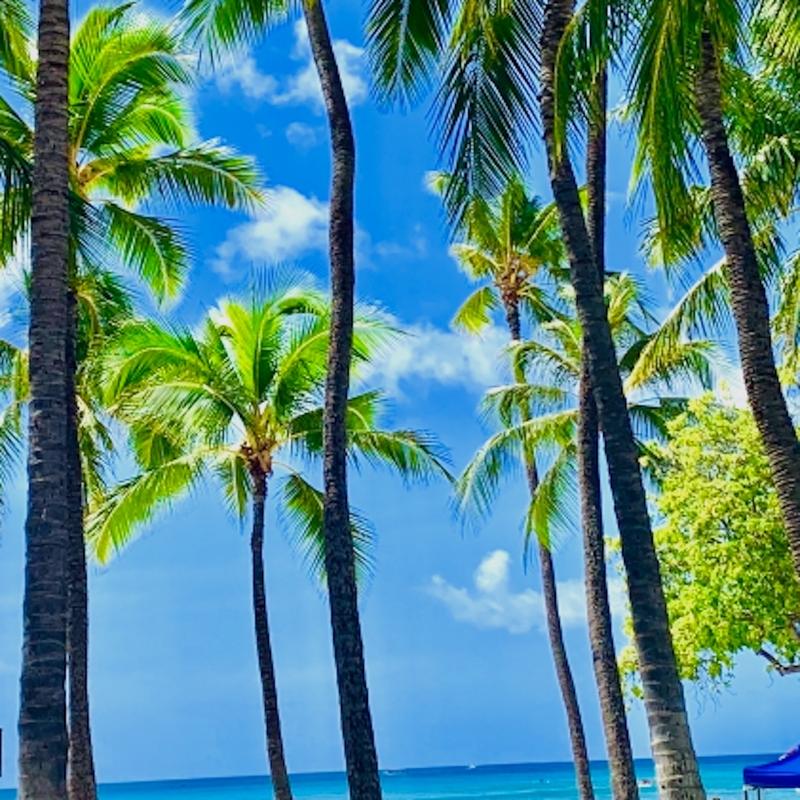 Dear Paradise