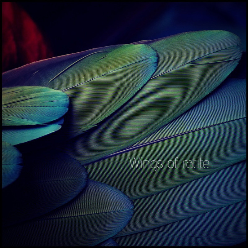 Wings of ratite