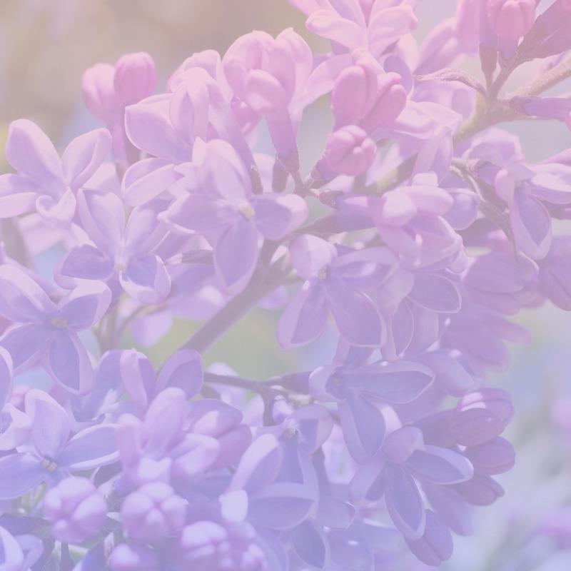 mariko lilac