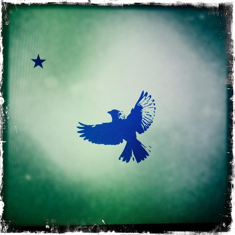 Bird & Flag