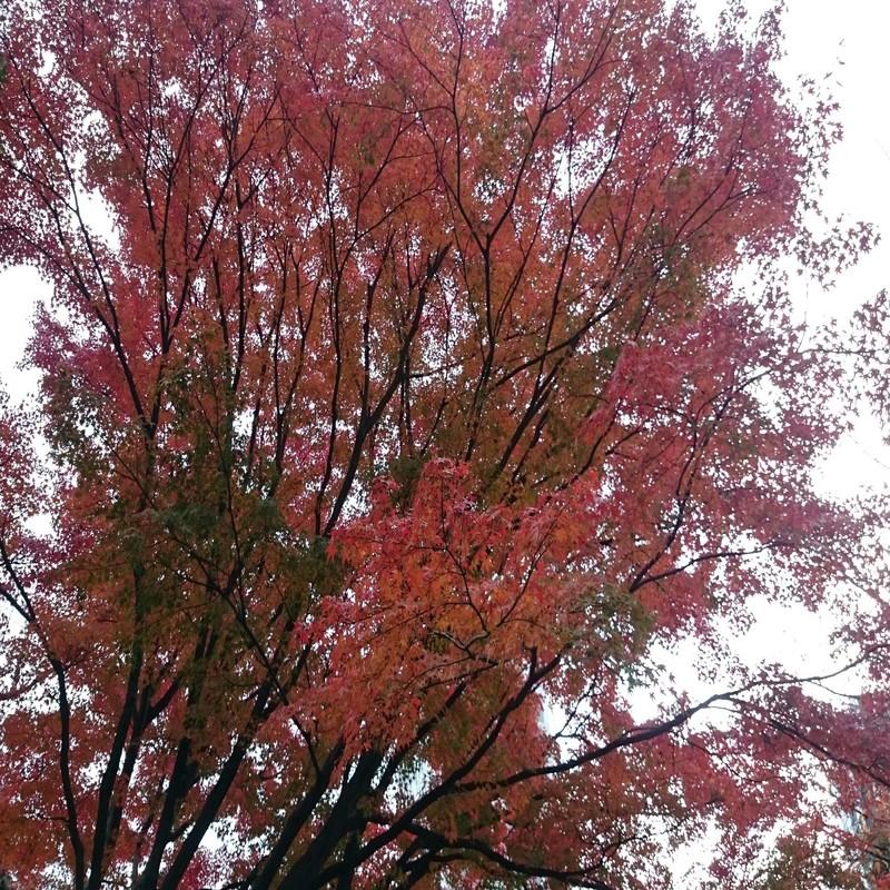 秋のワルツ