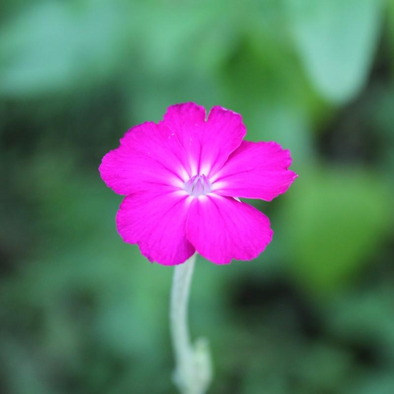 花の咲く日に