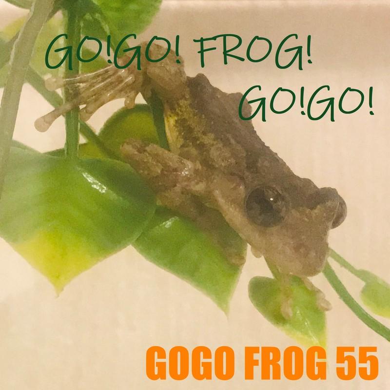 GO!GO! FROG! GO!GO!