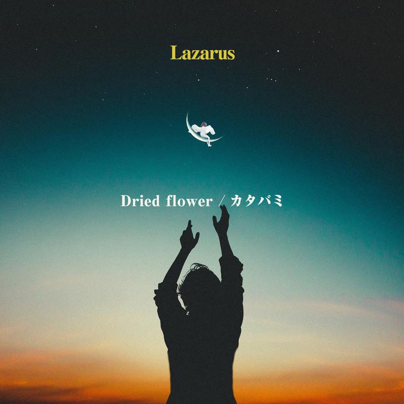 Dried flower / カタバミ