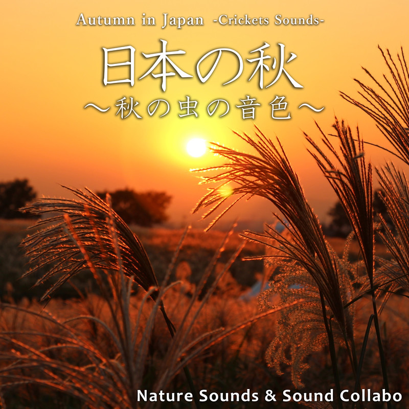 Autumn in Japan -Cricket Sounds-