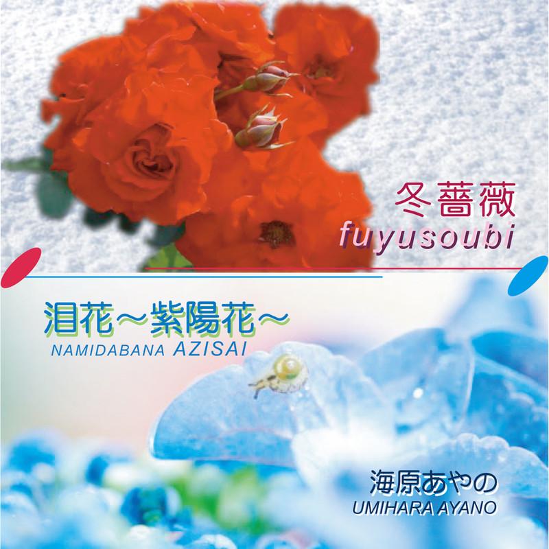 冬薔薇 泪花 ~紫陽花~