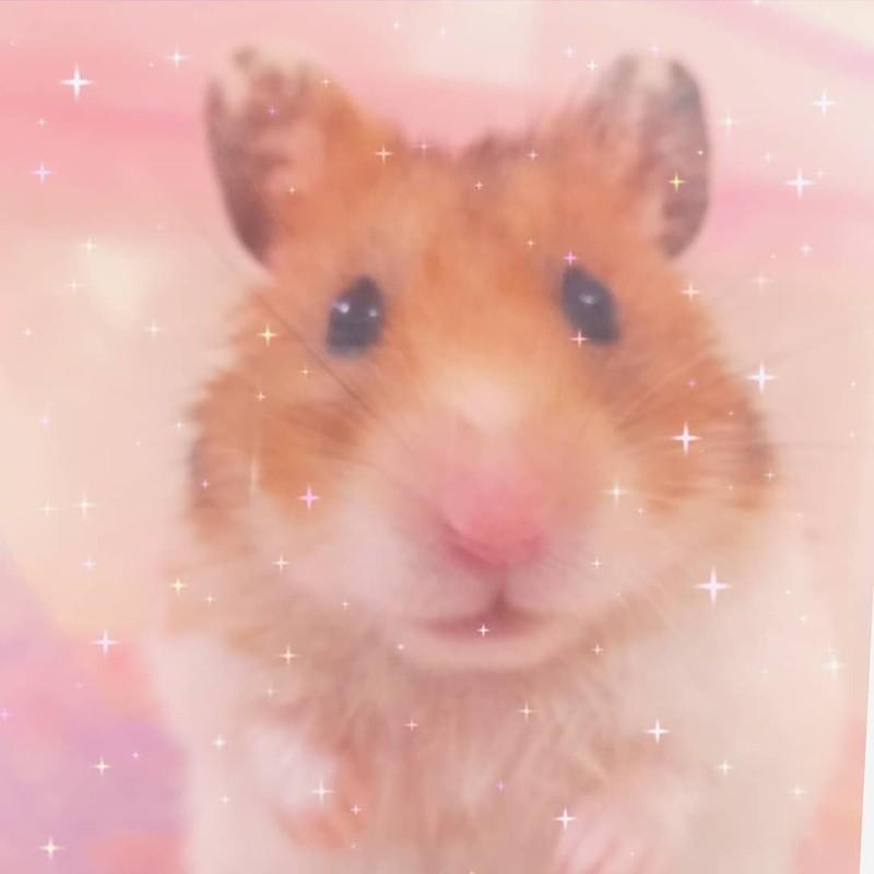 Hamster STAR