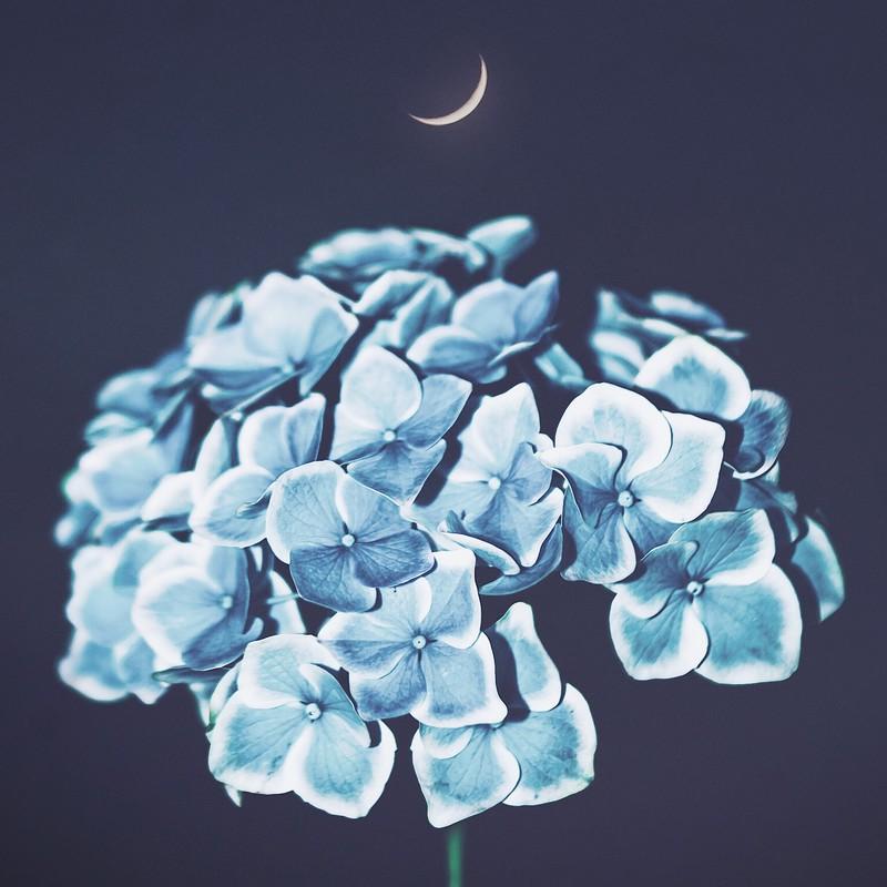 In Moonlight