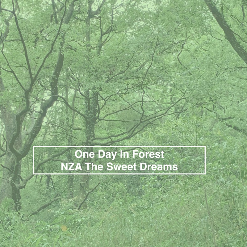 One Day In Forest