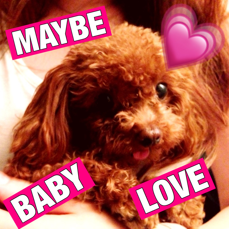 MAYBE BABY LOVE