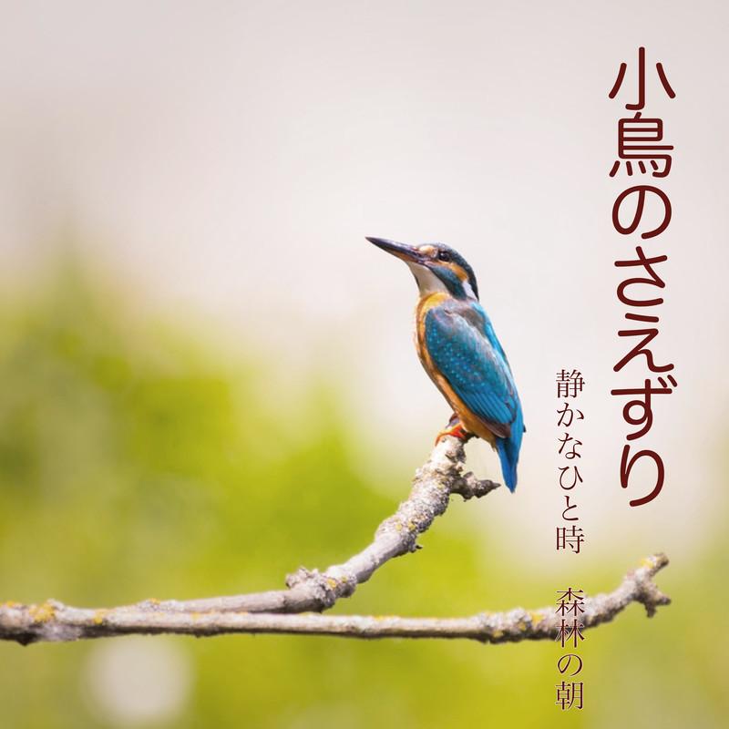小鳥のさえずり 静かなひと時 森林の朝