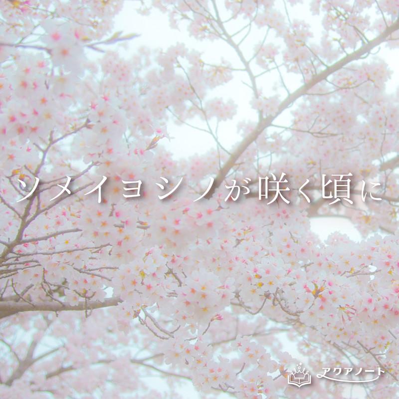 ソメイヨシノが咲く頃に