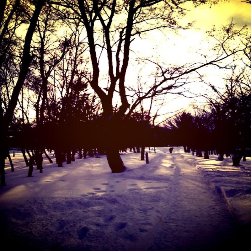 Moonlight in snow