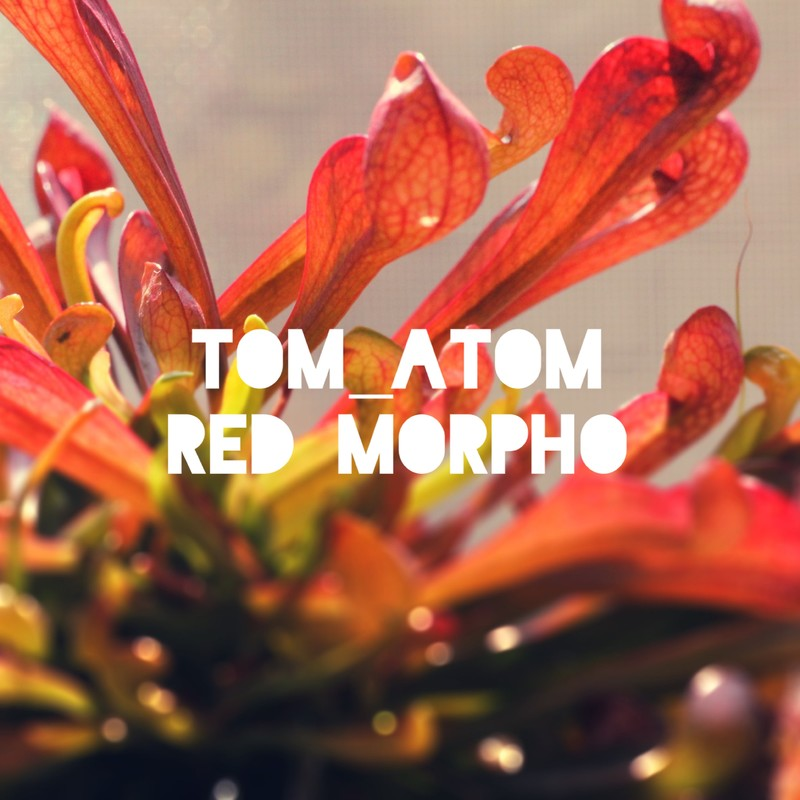 Red Morpho