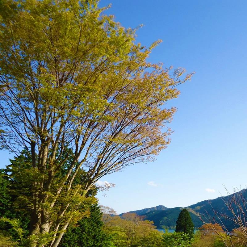 白い雲と秋風と (feat. GUMI)