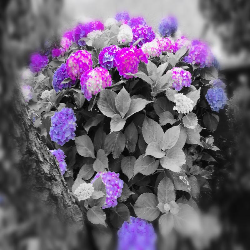 紫陽花 (DEMO)