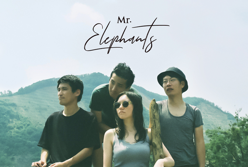 Mr.Elephants