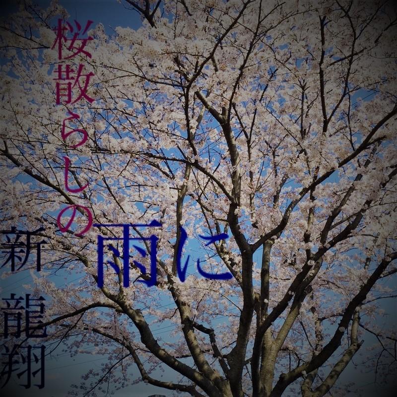 桜散らしの雨に