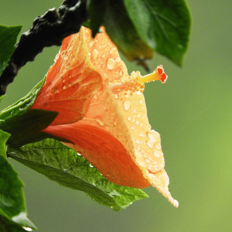 雨上がりのファンタジア