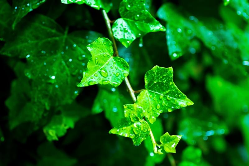 Rain Sounds CLASSIC