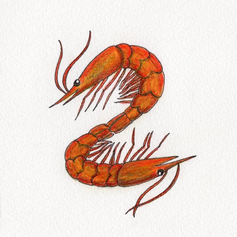 Shrimp -episode2-