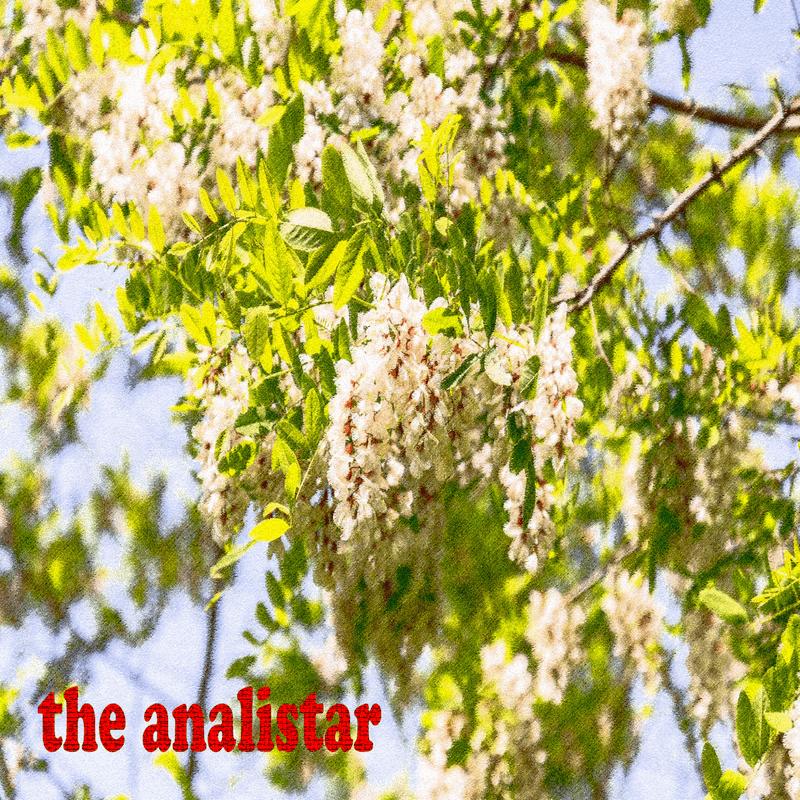 葉桜の季節に想うこと