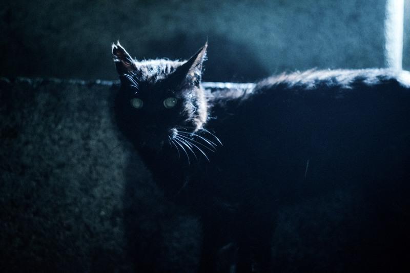 Meer Cat