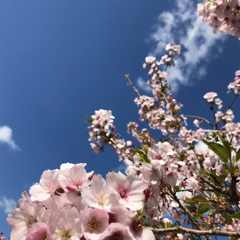 春が来る場所