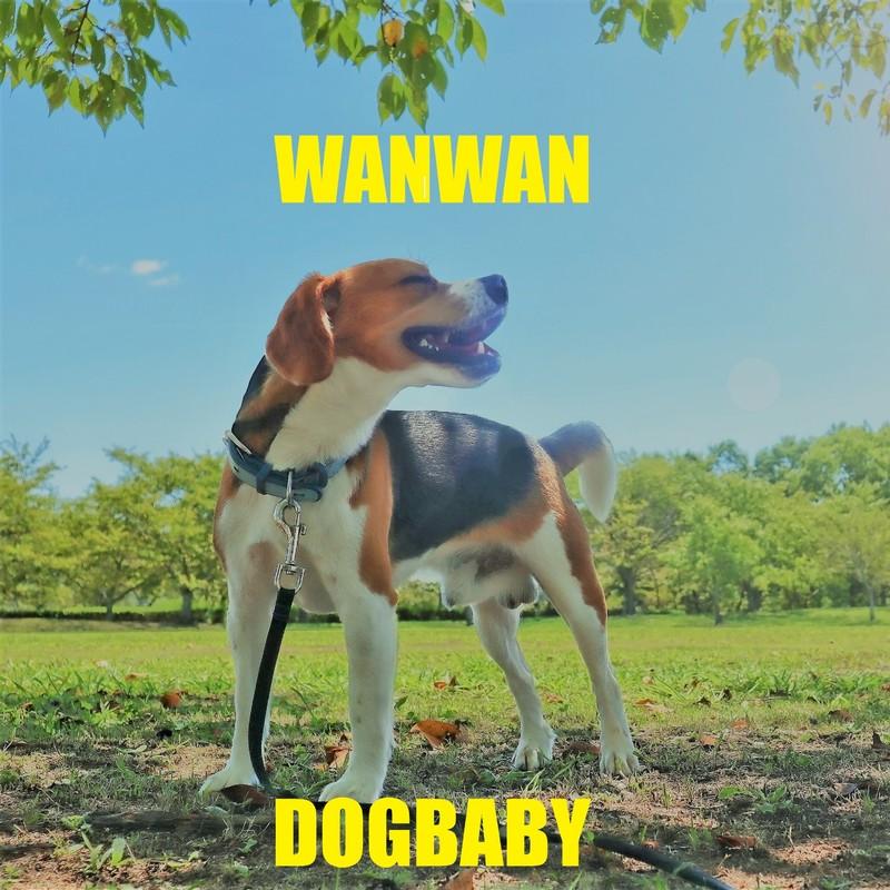 WANWAN